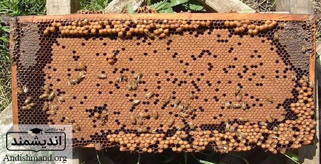 تغذیه کلنی زنبور عسل، تغذیه تکمیلی پروتئینی، تغذیه تحریکی کلنی، تغذیه برای تقویت کلنی