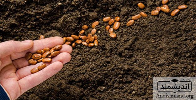 اجزاي عملكرد ، ميزان بذر مصرفي و توزيع بوتهها ، تعداد سنبله و تعداد دانه