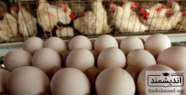 تولید گوشت مرغ، و تخم مرغ به صورت صنعتی، اهداف کیفی، جوجه متولد شده از نظر زنتیکی