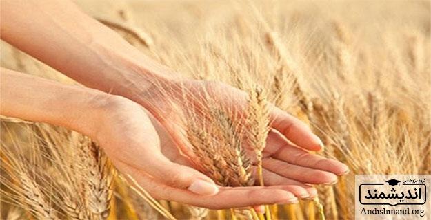 افزايش تراكم - عملكرد بالا ، بوتهها ، گياهي ، دانه غلات ، فتوسنتزي ، رشد رويشي ، تابش خورشيدي ، رطوبت و حاصلخيزي خاك ، تنش شديد