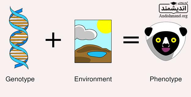 اثرات متقابل ژنوتیپ × محیط ، به نژادگران ، ارقام ، فنوتیپ ، ژنوتیپ ، پتانسیل ژنتیکی ، محیط ، اهداف اصلاح ، پتانسیل ژنتیکی بالا ، پایداری عملکرد، زراعی