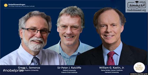 نوبل پزشکی – ویلیام کیلین، سر پیتر ردکلیف و گرگ سمنزا برندگان امسال