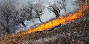 آتش سوزی در جنگل – اراضی جنگلی آستارا در آتش سوخت
