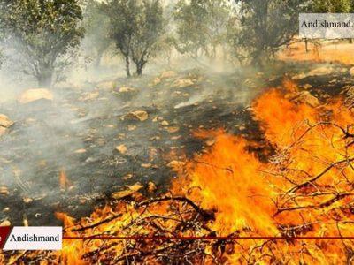 جنگل های گچساران – مهار آتش سوزی گچساران پس از 80 ساعت