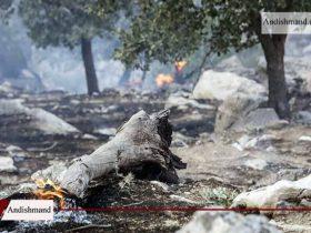 جنگل های سوخته – بازیابی این جنگل ها نیم قرن زمان می برد