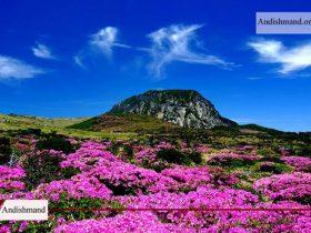 جزیره جیجو - معرفی جزیره زیبای جیجو در کره جنوبی