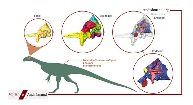 تکودونتوسور - بازسازی مغز یکی از قدیمی ترین دایناسورهای جهان