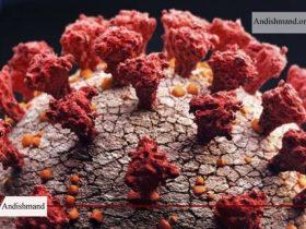 گونه جهش یافته جدید کرونا - شناسایی گونه جدیدی از ویروس کرونا در بریتانیا