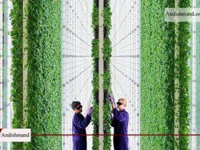 ساخت مزرعه عمودی با 360 برابر بازدهی بیشتر