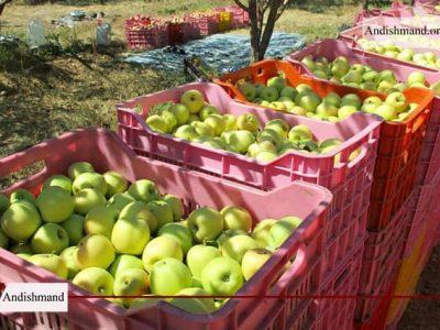 صادرات سیب ایران - لزوم رفع موانع صادرات سیب ایران به بازارهای جهانی